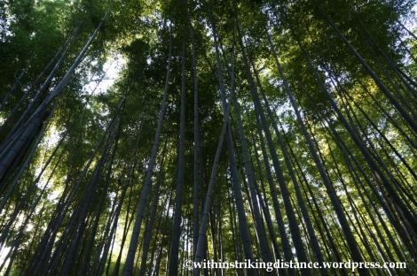 22Nov14 016 Bamboo Grove Tenryu-ji Arashiyama Kyoto Kansai Japan