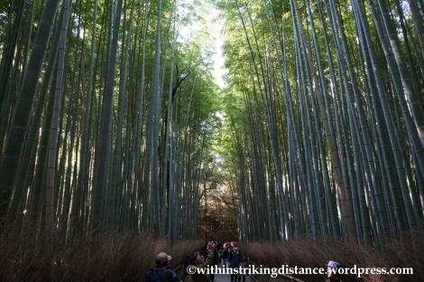 22Nov14 017 Bamboo Grove Tenryu-ji Arashiyama Kyoto Kansai Japan
