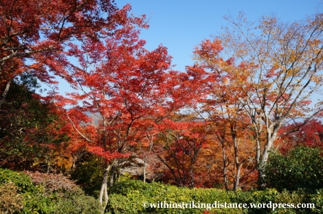 22Nov14 018 Autumn Okochi Sanso Arashiyama Kyoto Kansai Japan