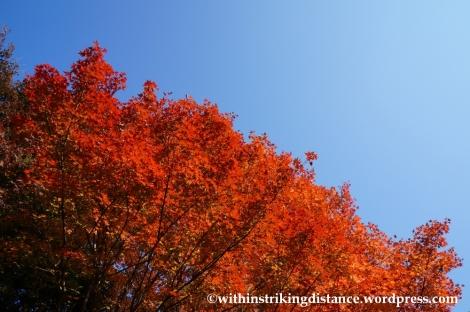 22Nov14 019 Autumn Okochi Sanso Arashiyama Kyoto Kansai Japan