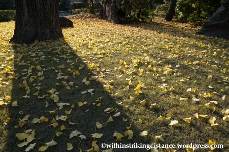23Nov14 020 Ginkgo Autumn Leaves Nijo Castle Kyoto Kansai Japan