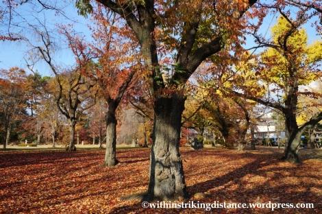 23Nov14 021 Autumn Leaves Nijo Castle Kyoto Kansai Japan