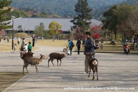 24Nov14 002 Deer Nara Japan