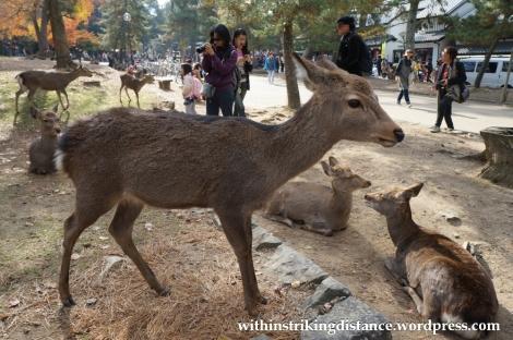 24Nov14 003 Deer Nara Japan