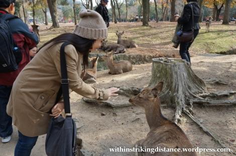 24Nov14 004 Deer Nara Japan