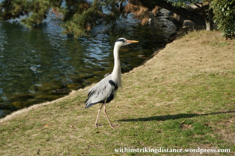 24Mar15 009 Japan Kyushu Fukuoka Ohori Park