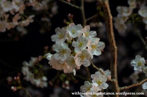 26Mar15 012 Japan Kyushu Nagasaki Mount Inasa Night View Fuchi Shrine Sakura Cherry Blossoms