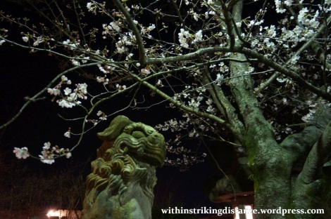26Mar15 013 Japan Kyushu Nagasaki Mount Inasa Night View Fuchi Shrine Sakura Cherry Blossoms