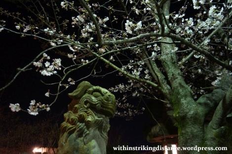 26Mar15 013 Japan Kyushu Nagasaki Mount Inasa Night View Fuchi Shrine Sakura Cherry Blossoms