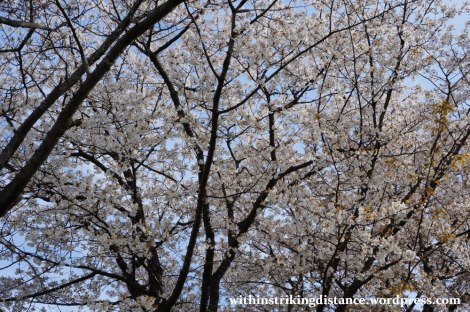 27Mar15 006 Japan Kyushu Kumamoto Suizenji Jojuen Garden