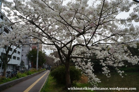 28Mar15 001 Japan Kyushu Fukuoka Castle Maizuru Ohori Park Sakura Cherry Blossom