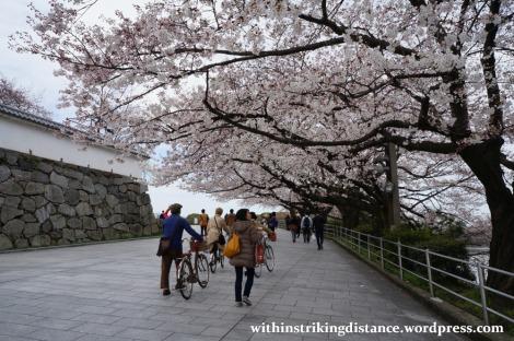 28Mar15 005 Japan Kyushu Fukuoka Castle Maizuru Ohori Park Sakura Cherry Blossom