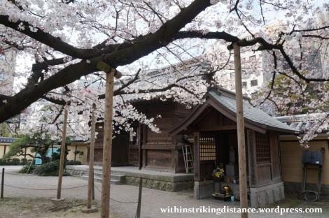 28Mar15 005 Japan Kyushu Fukuoka Tochoji Temple Sakura Cherry Blossoms