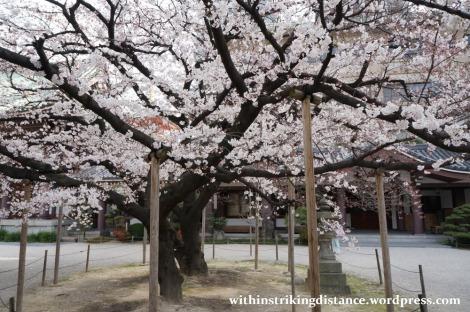 28Mar15 007 Japan Kyushu Fukuoka Tochoji Temple Sakura Cherry Blossoms