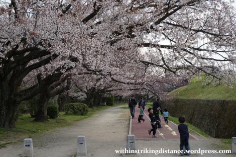 28Mar15 008 Japan Kyushu Fukuoka Castle Maizuru Ohori Park Sakura Cherry Blossom