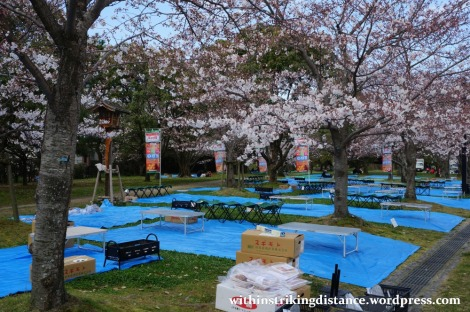 28Mar15 011 Japan Kyushu Fukuoka Castle Maizuru Ohori Park Sakura Cherry Blossom