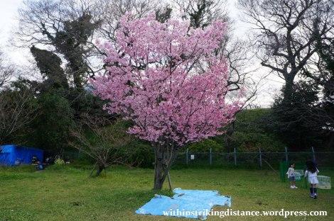 28Mar15 012 Japan Kyushu Fukuoka Castle Maizuru Ohori Park Sakura Cherry Blossom