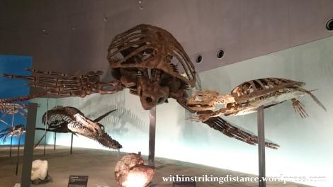 30Jun15 016 Japan Honshu Fukui Prefectural Dinosaur Museum