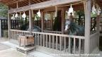 06jul15-014-japan-honshu-shimane-izumo-taisha-shrine