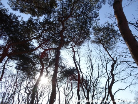 09feb16-014-south-korea-seoul-seonjeongneung-joseon-royal-tombs