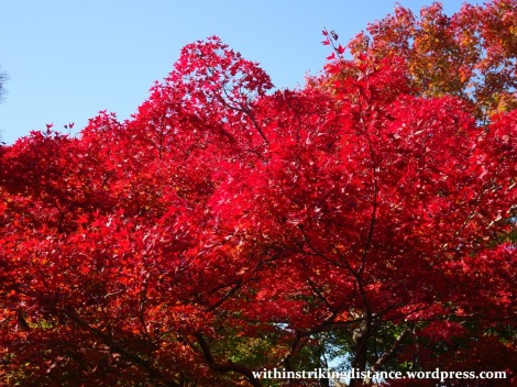 12nov16-001-japan-kyoto-higashiyama-tofukuji-autumn-leaves-koyo