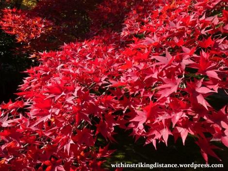 12nov16-002-japan-kyoto-higashiyama-tofukuji-autumn-leaves-koyo