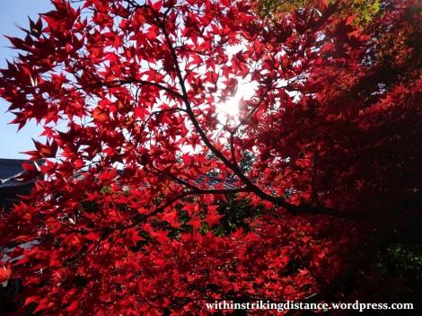 12nov16-003-japan-kyoto-higashiyama-tofukuji-autumn-leaves-koyo