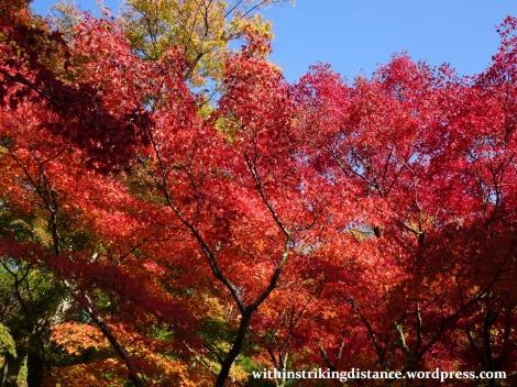 12nov16-006-japan-kyoto-higashiyama-tofukuji-autumn-leaves-koyo