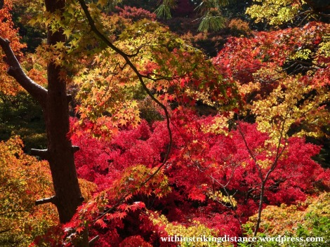 12nov16-007-japan-kyoto-higashiyama-tofukuji-autumn-leaves-koyo