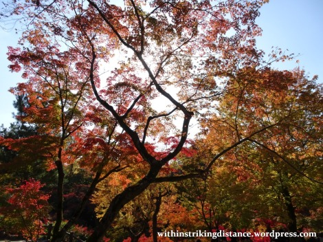 12nov16-008-japan-kyoto-higashiyama-tofukuji-autumn-leaves-koyo